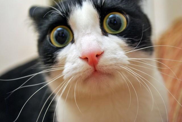 cat-640x427.jpg
