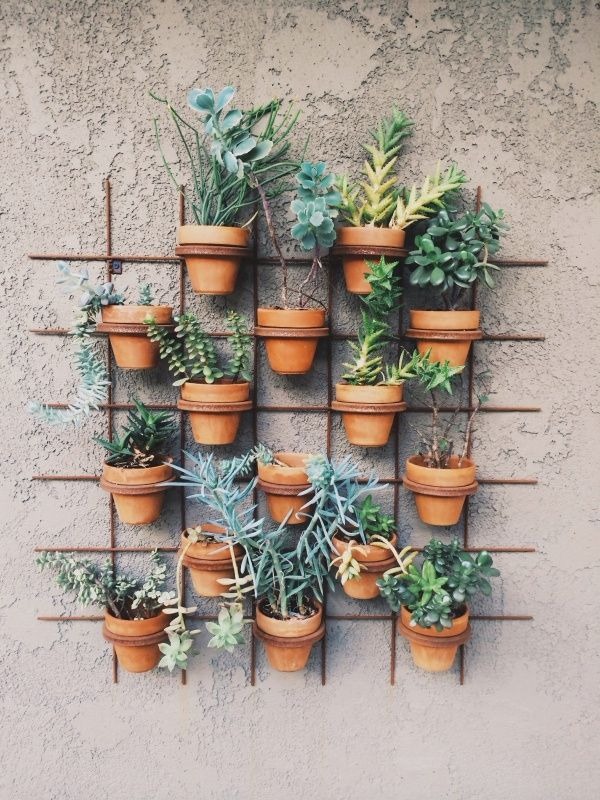 hanging-wall-plants