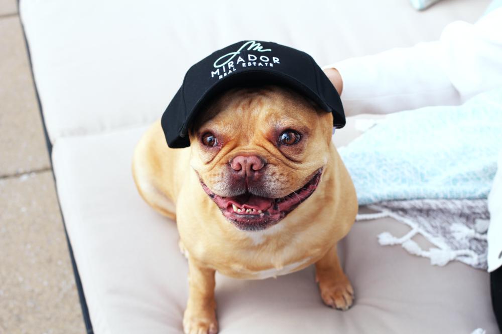 mirador-dog-hat