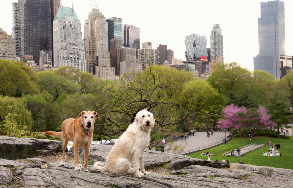 PC:  Central Park