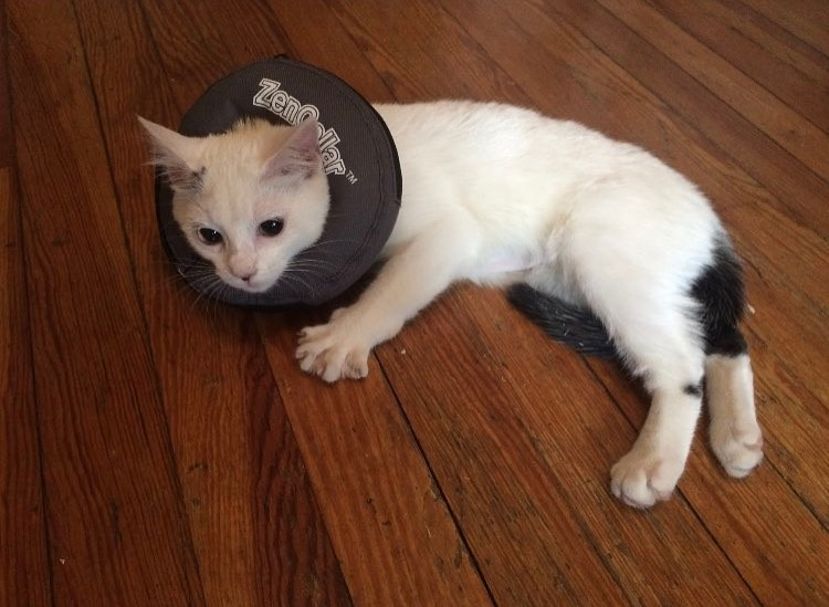 Jessica's cat, Patsy