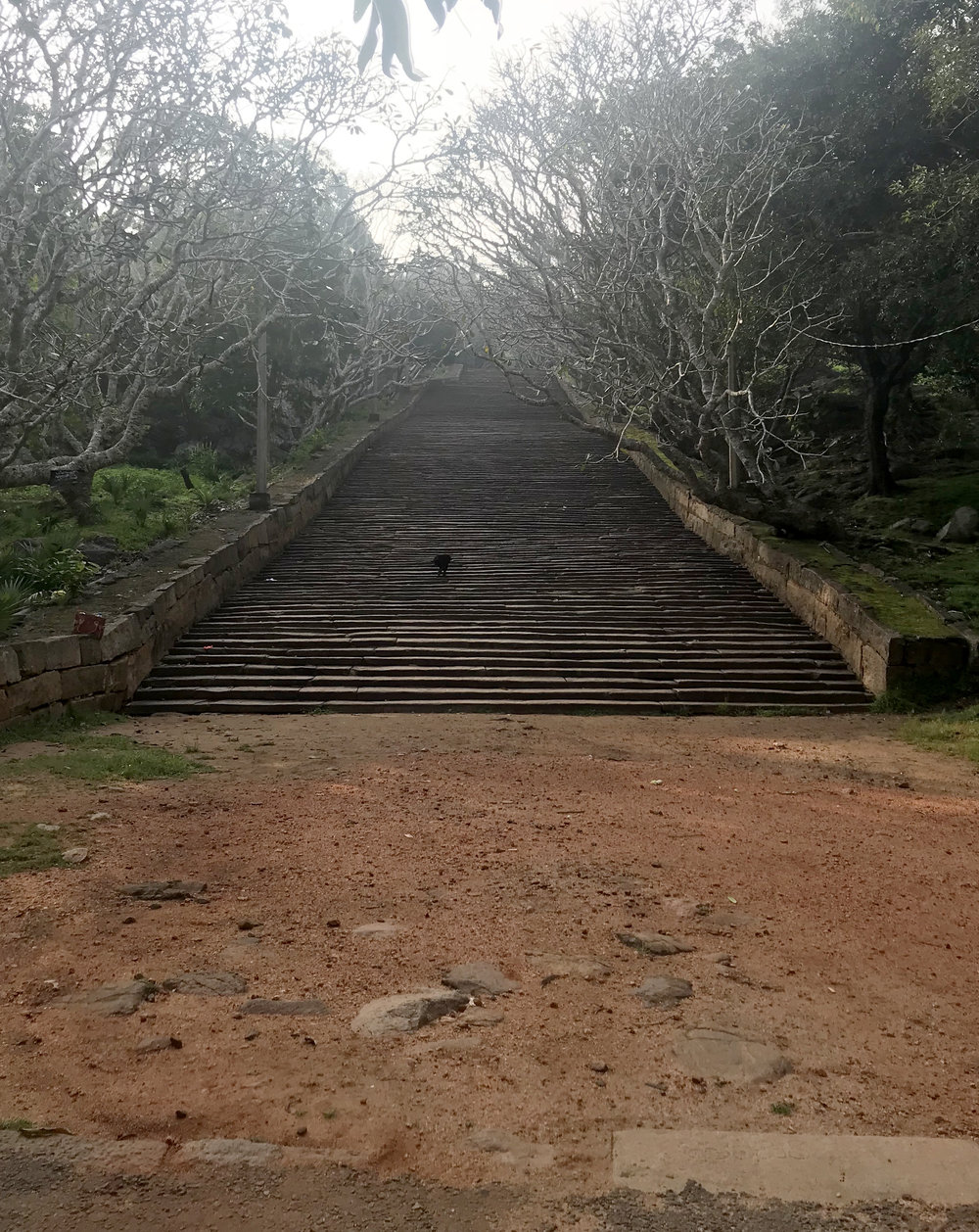 The steps at the base of Mihintale. Don't let the low height of each step fool you into thinking this was an easy hike.