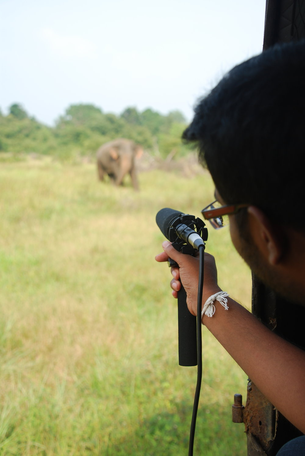 "Sachintha recording the vocalizations of a male in musth (Elephant 001, ""Arnold""). Photo: Chase LaDue."