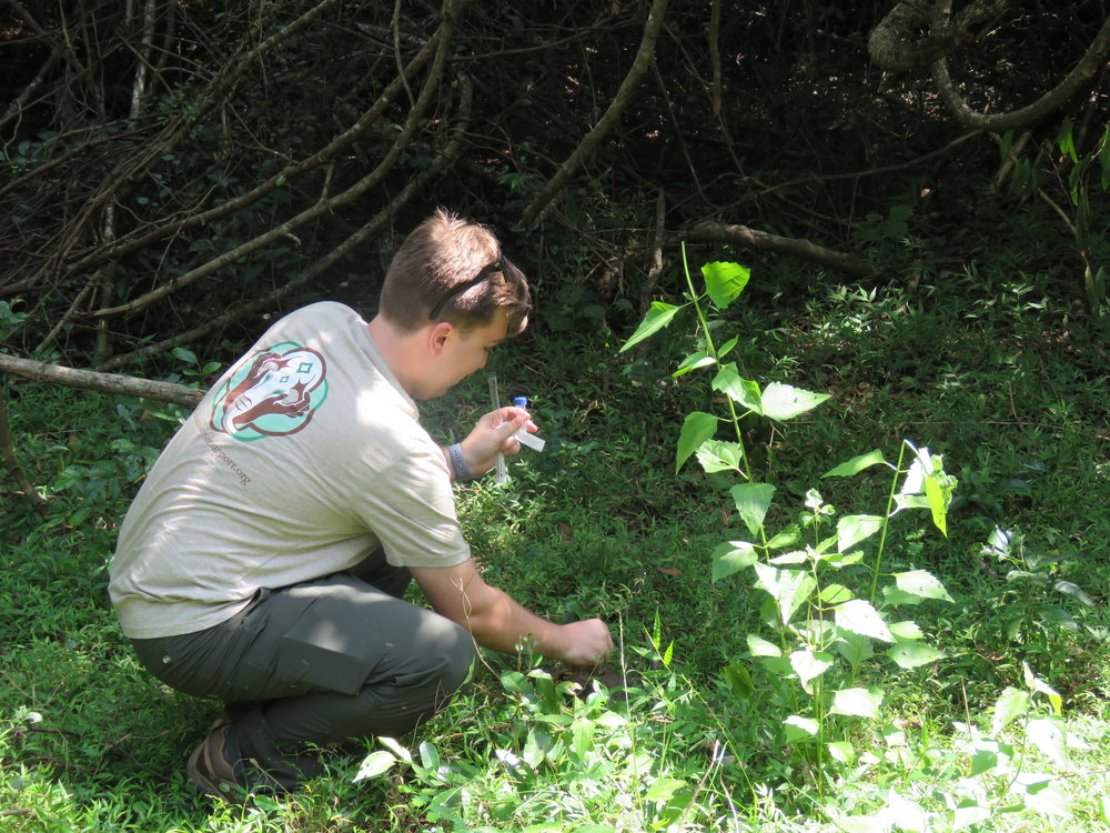 Collecting (elephant) fecal samples in the field, donning a shirt from another of our generous supporters,   Asian Elephant Support  . Photo: Wendy Kiso.