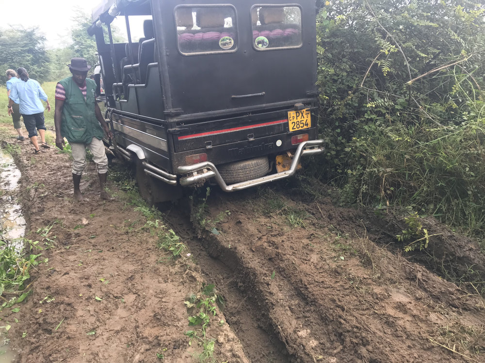 Our vehicle stuck in the mud during our last day in the field at Wasgamuwa. Yes, that's the vehicle that rescued us a few days earlier.