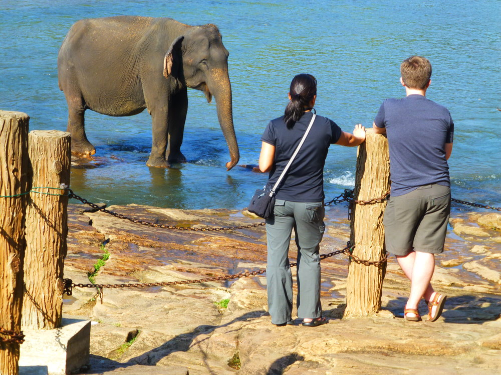 Wendy and I discuss elephants while watching elephants at Pinnawala. Photo: Elizabeth Freeman.