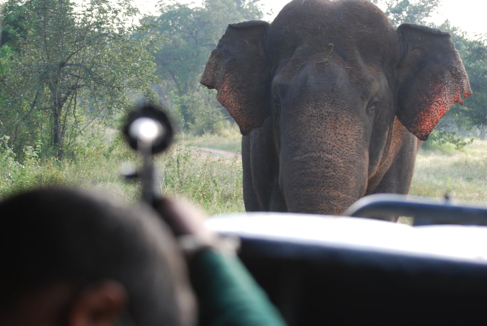 Sachinthat recording a musth male elephant (Bull 056) that approached our vehicle during our observation. Wasgamuwa National Park, 27 Jan 2019.