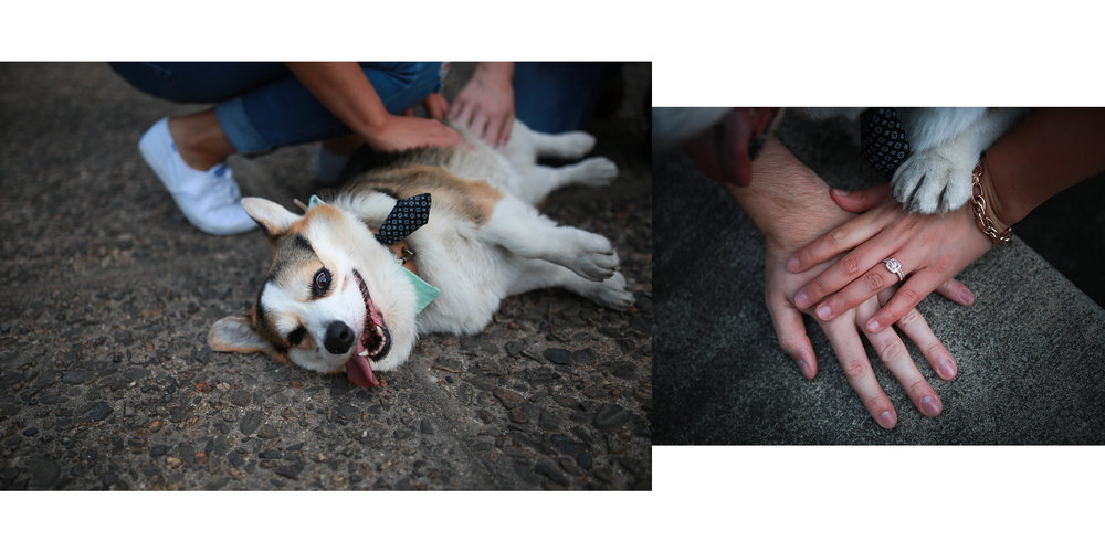 Dog photography in Philadelphia