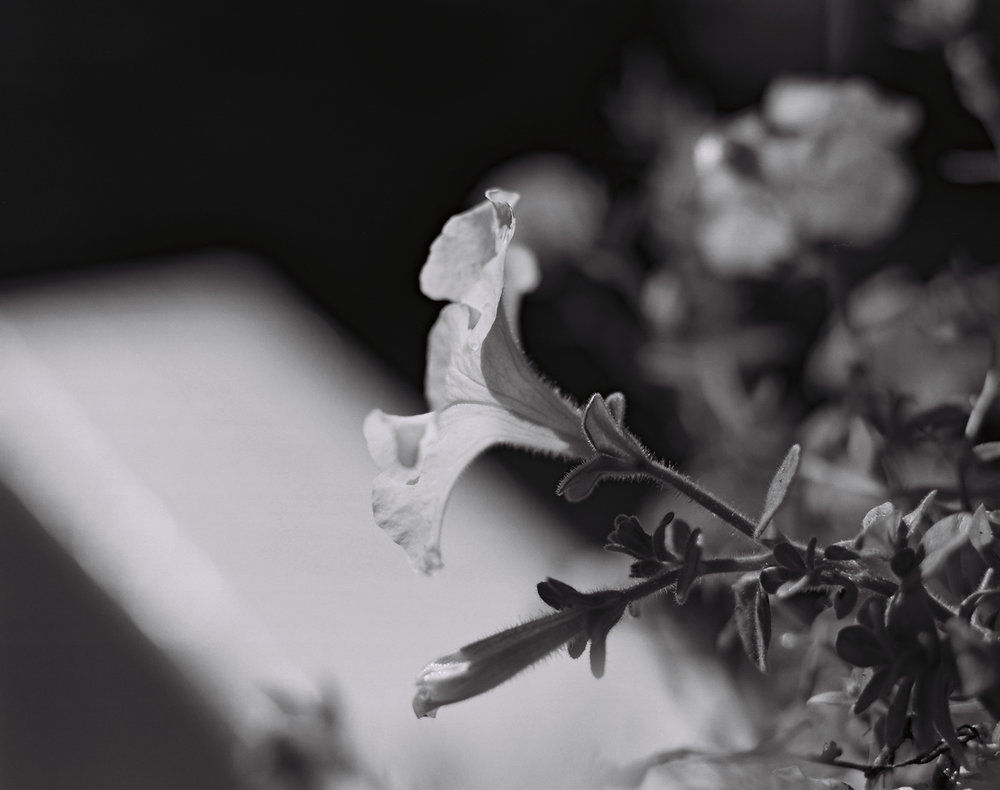 © Julia Maloof Verderosa. 917 566 1521-10.jpg