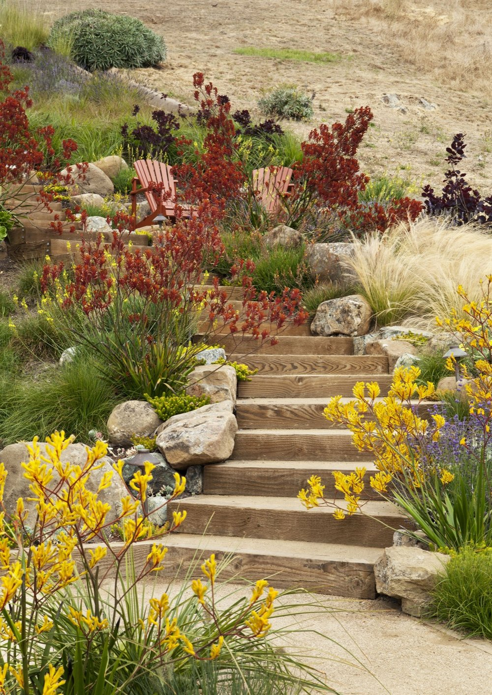 Red and yellow plantings warm up cool tones of the site.