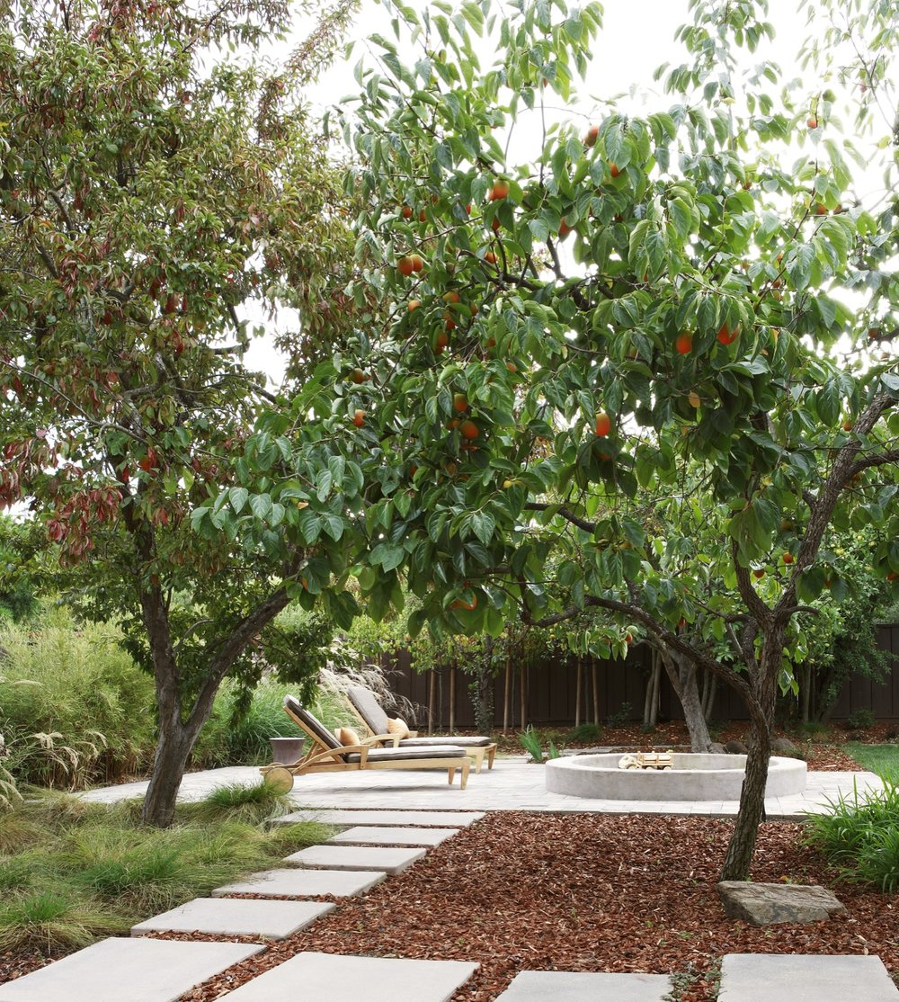Persimmon trees frame a view down a path to a seating area, and the sandbox.