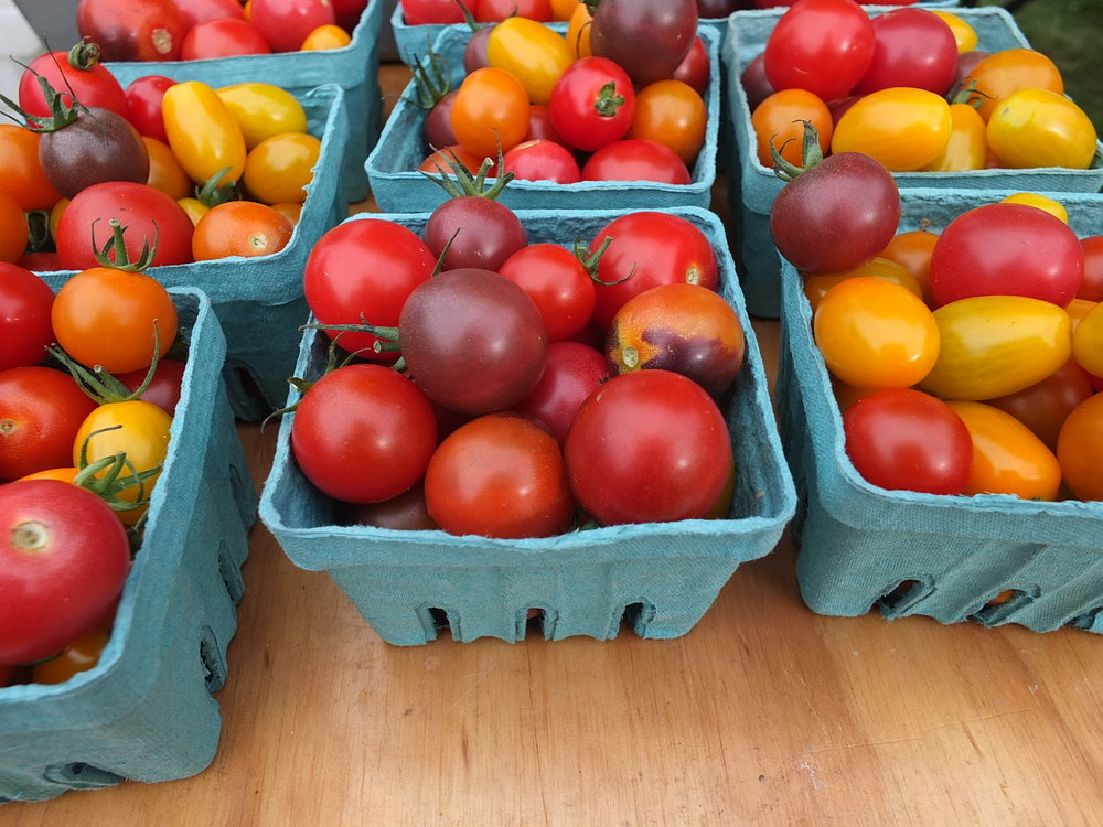 Fresh cherry tomatoes from Blue Heron Farm at the Champlain Islands Farmers' Market
