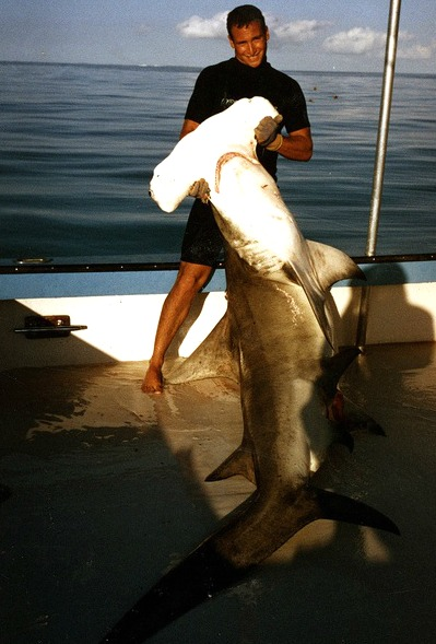 Large-hammerhead-shark-caught-while-fishing-in-key-west