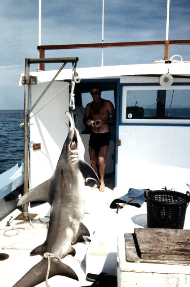 Large-hammerhead-shark-on-key-west-fishing-charter-party