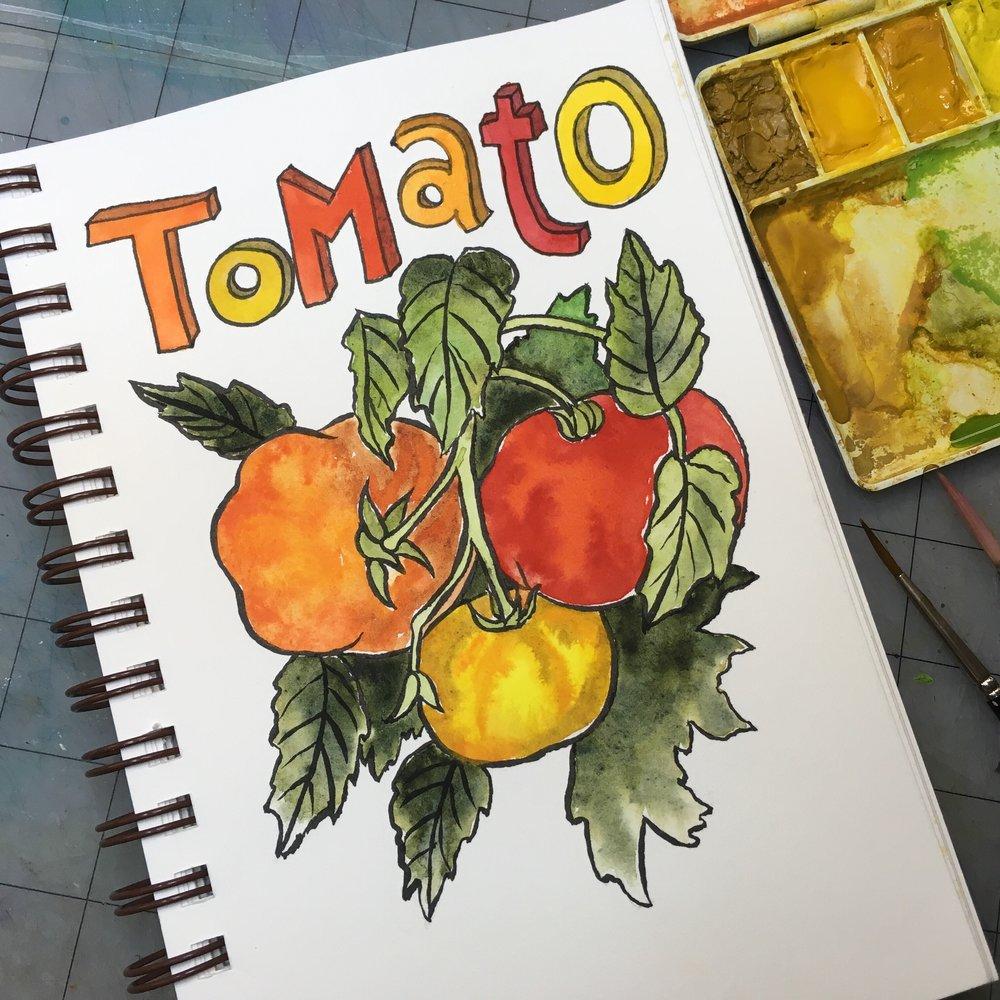 Tomato, watercolor © Denise Ortakales