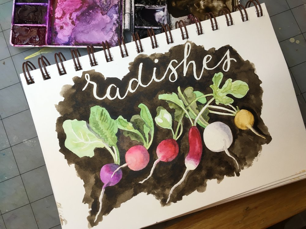 Radishes, watercolor © Denise Ortakales