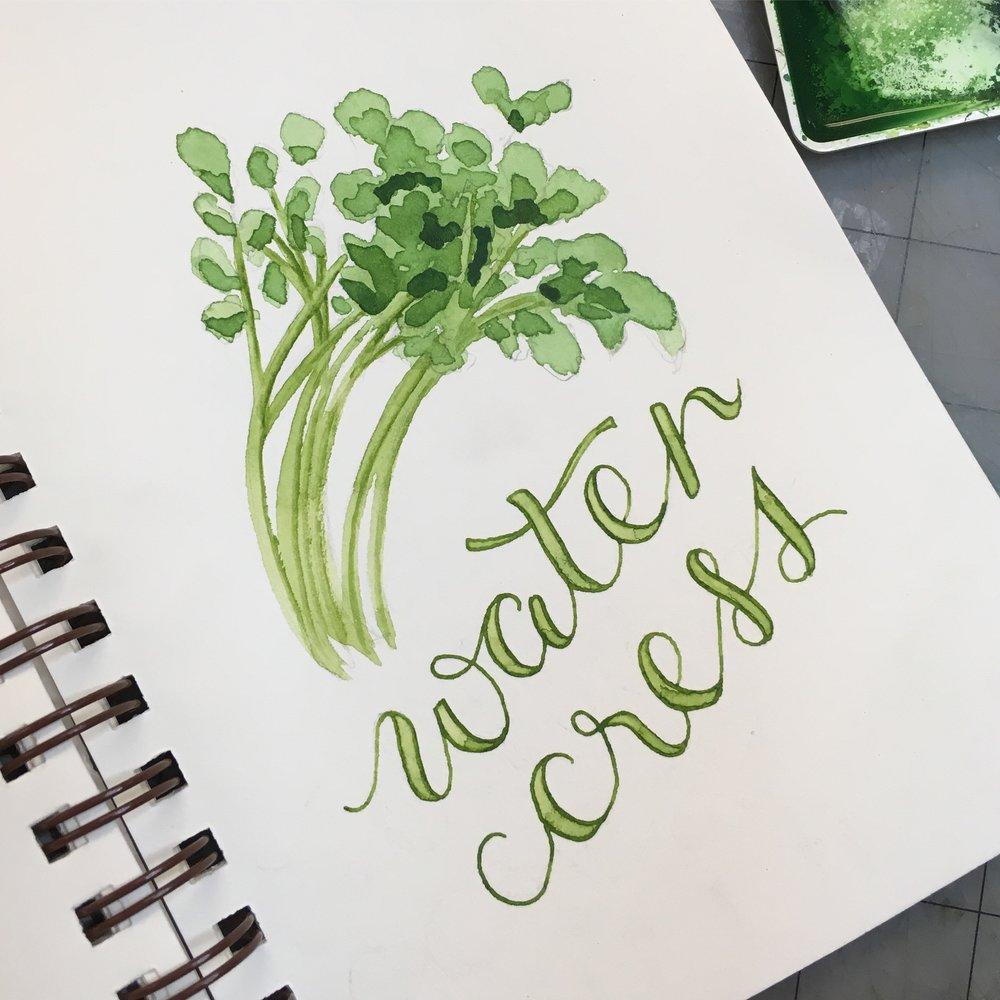 Water Cress, watercolor © Denise Ortakales