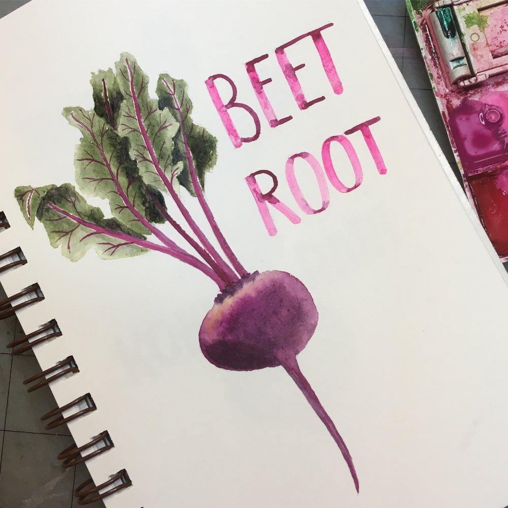 Beet Root, watercolor © Denise Ortakales