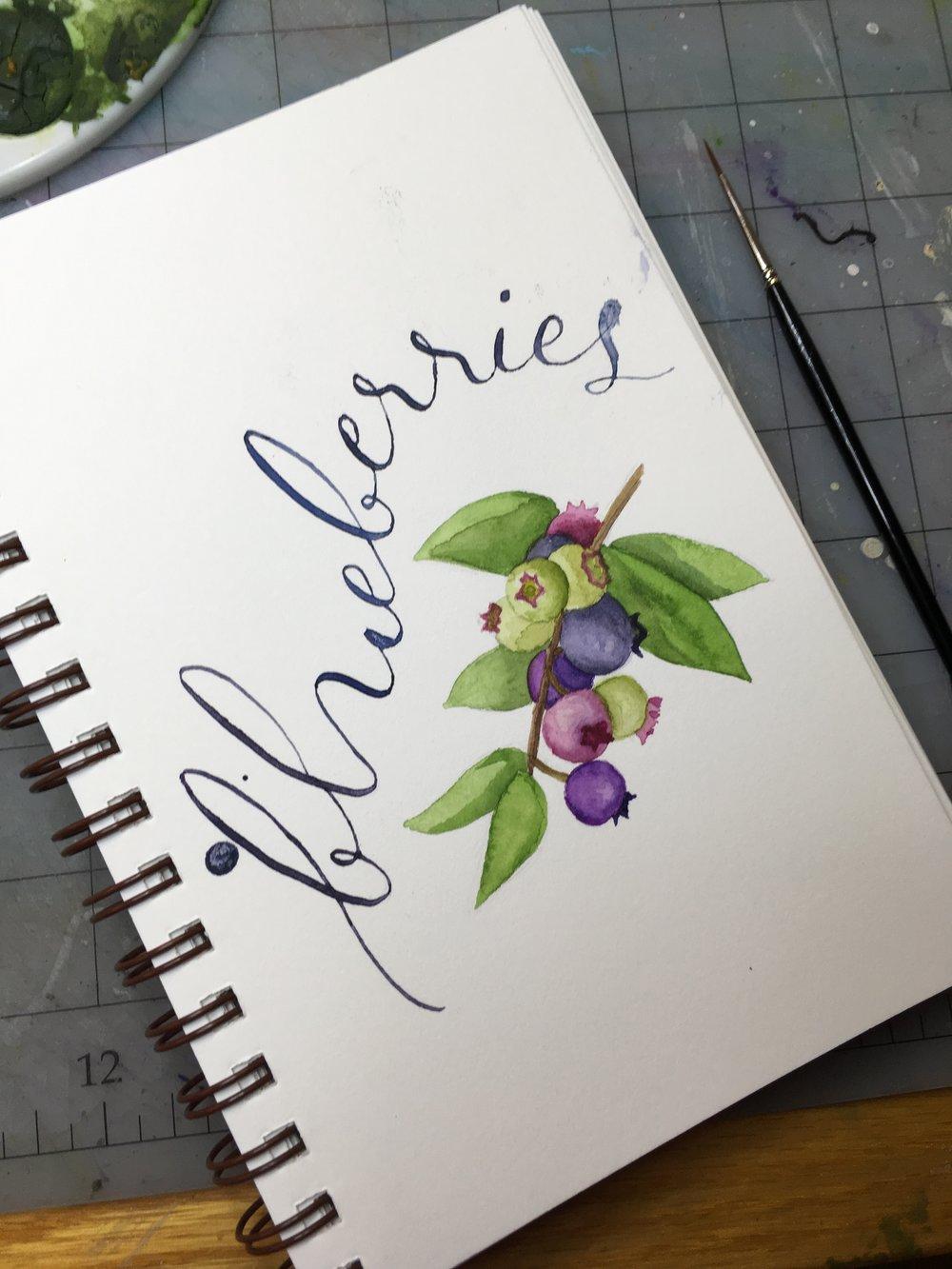 Blueberries, watercolor © Denise Ortakales