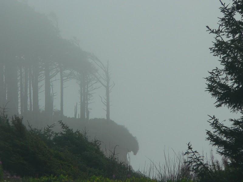Oregon coast, photo by Ed Wheeler