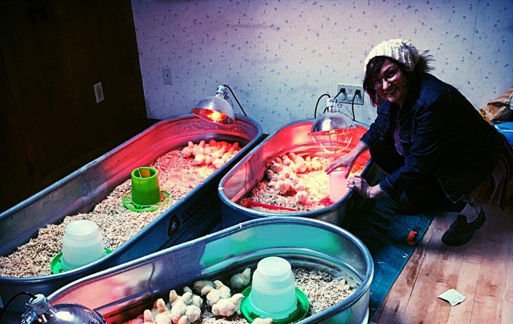 baby chicks gallery.JPG