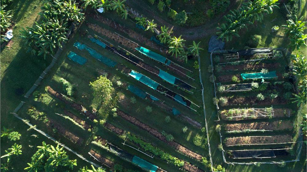organic-gardens-4.jpg