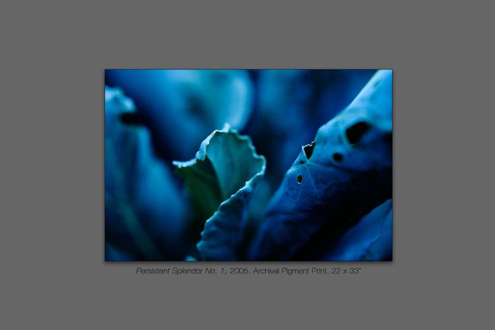 Persistent Splendor No. 1, 2005