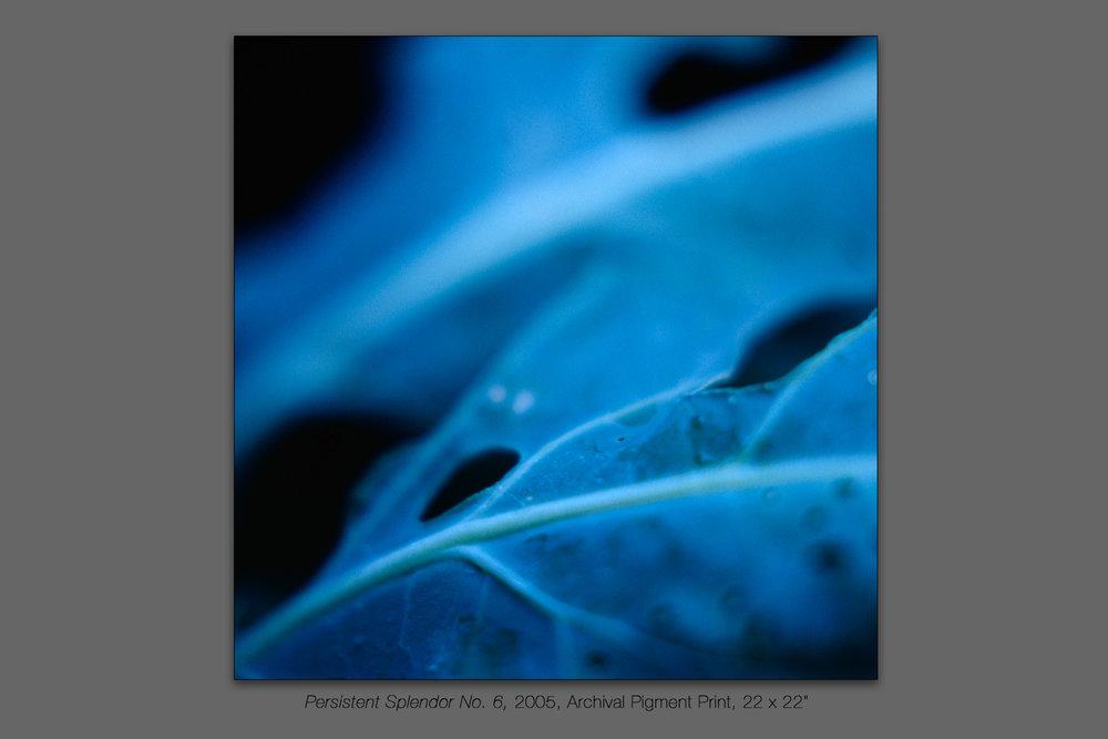 Persistent Splendor No. 6, 2005