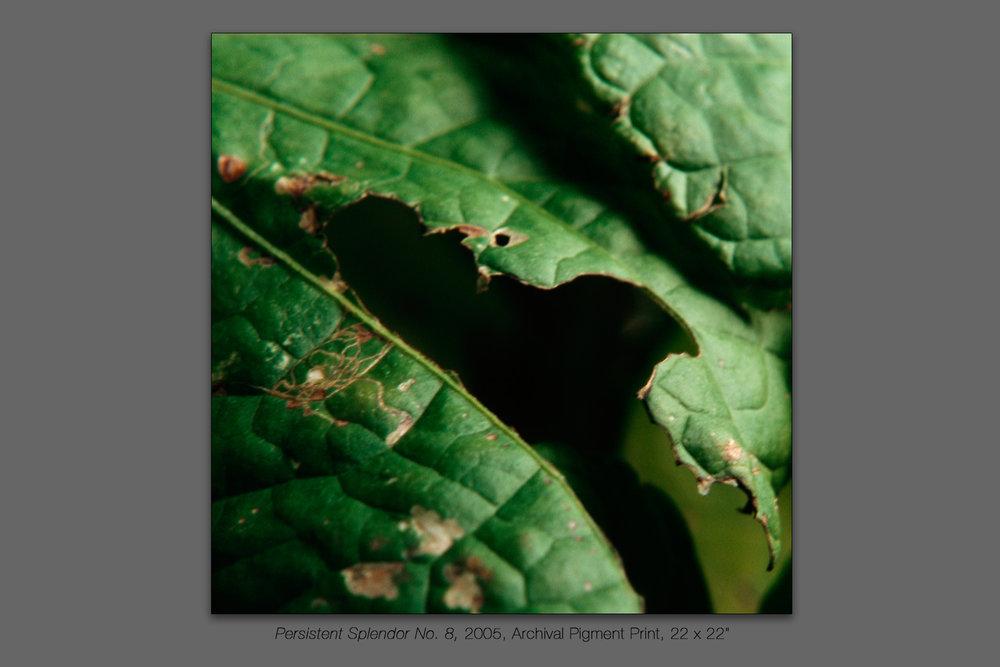 Persistent Splendor No. 8, 2005