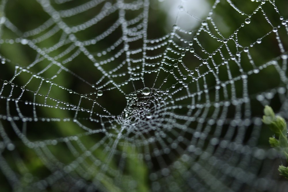 spider_web_cobweb_insect_nature_net_trap_spiderweb_dew-677595.jpg!d.jpeg