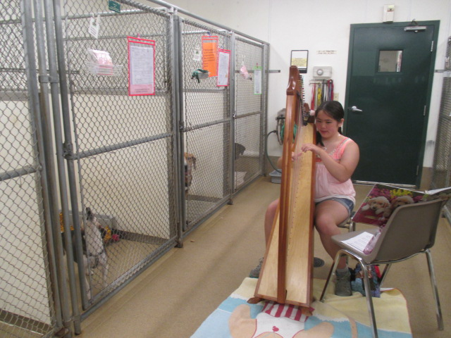 Playing the harp for dogs in their kennels at Northwoods Humane Society.