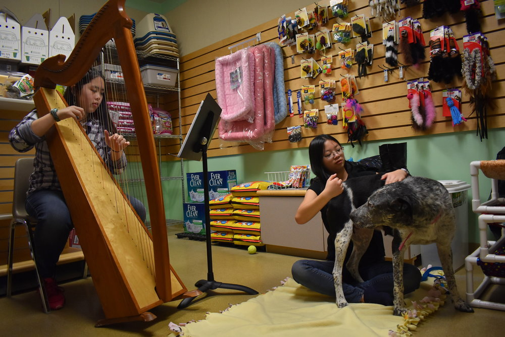 Playing the harp for a dog at Northwoods Humane Society. She was a recent transfer from a high-kill shelter in Texas and just gave birth to seven puppies.