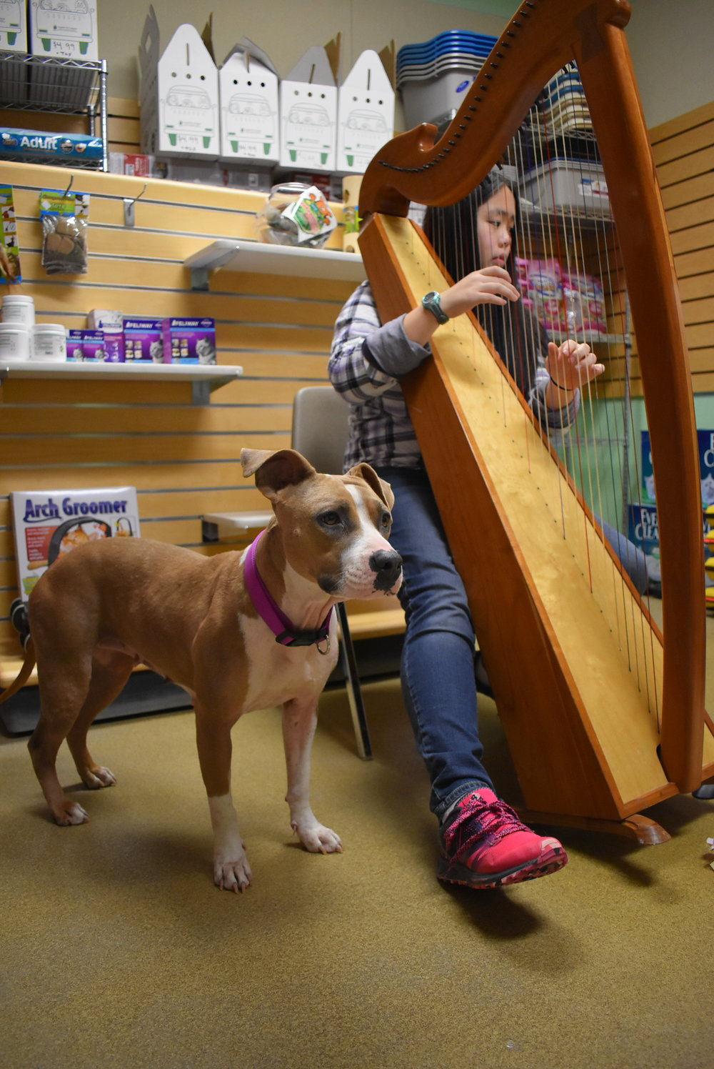 Playing for a dog who was a recent transfer from a high-kill shelter in Texas. Winnie was very anxious and nervous; and responded well to the music.
