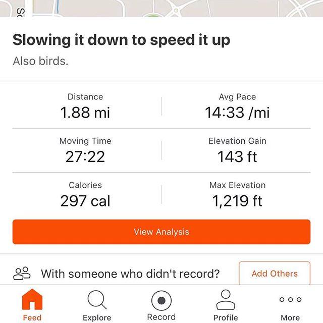 The birds on on my run were scary. #teacherrunner #everydamnmile #stravarun #beginnerrunner