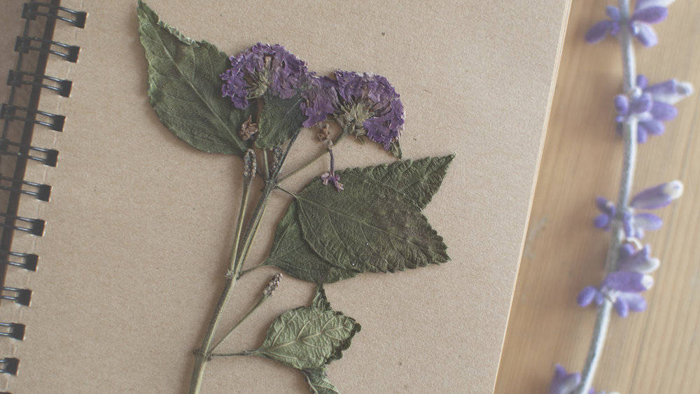 lantana flower pressing