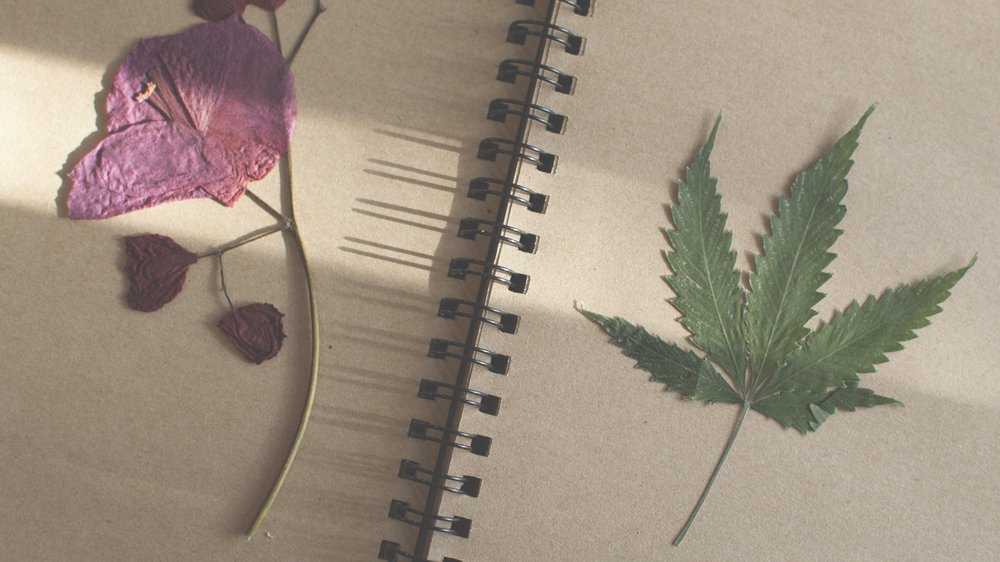 bougainvillea and cannabis plant pressings