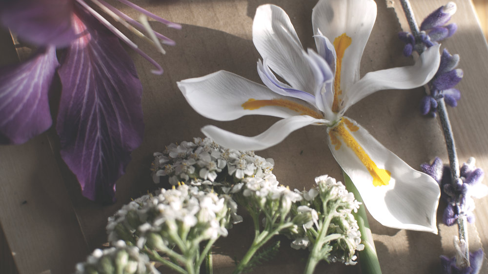 flowers for pressing