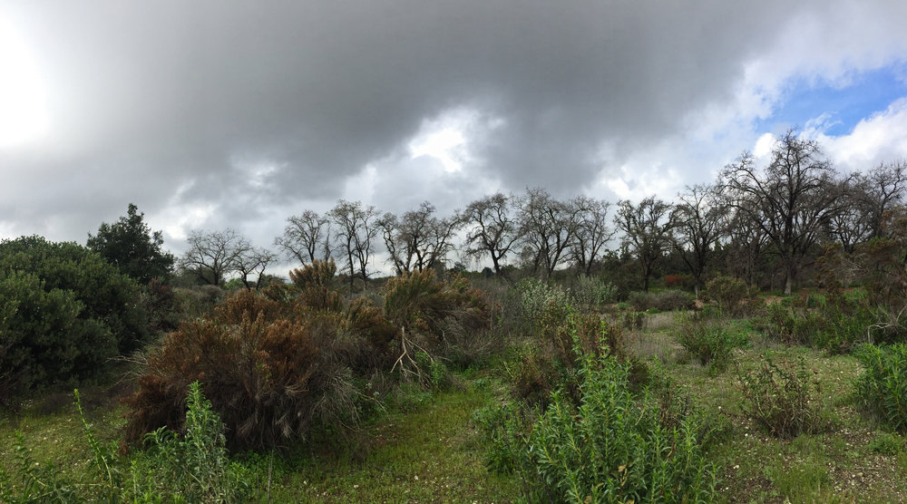 Rancho Santa Ana Botanic Garden in Claremont, CA