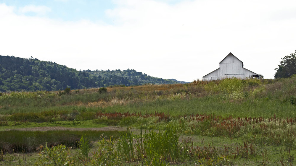The oldest barn on the former Giacomini Dairy Ranch.