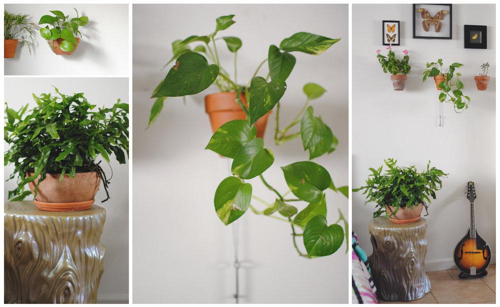 houseplantsinthebedroom.jpg
