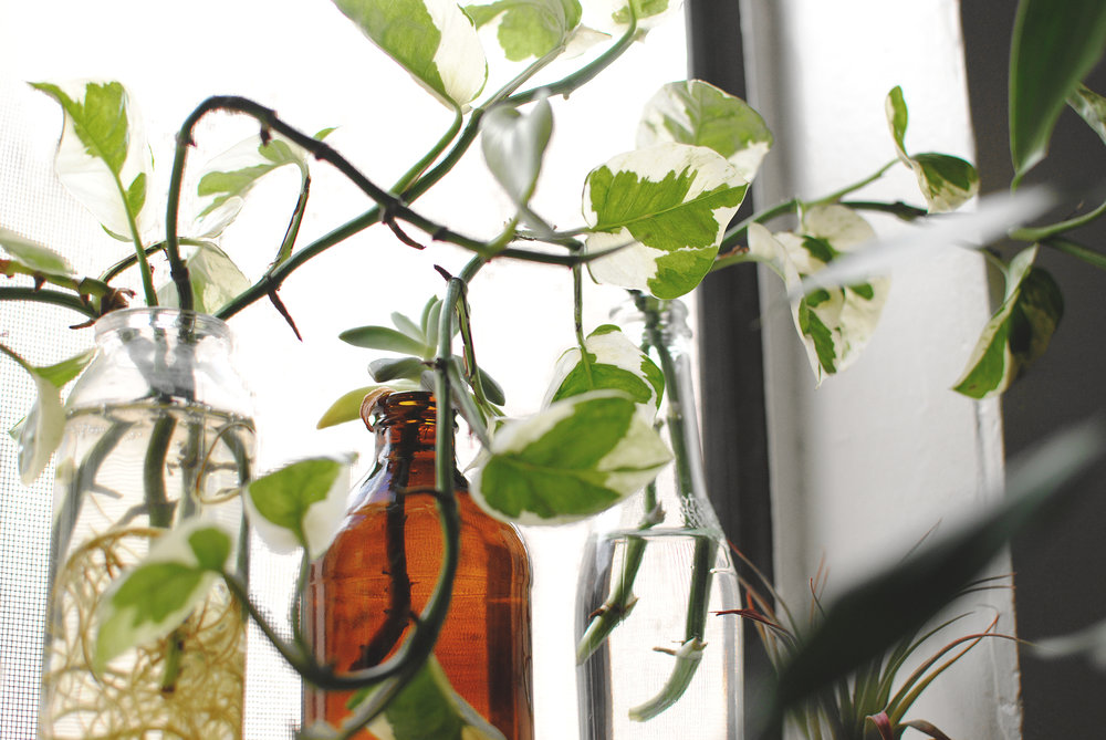 Indoor Garden Vintage Jars And Water Plants Fairytale Slavery