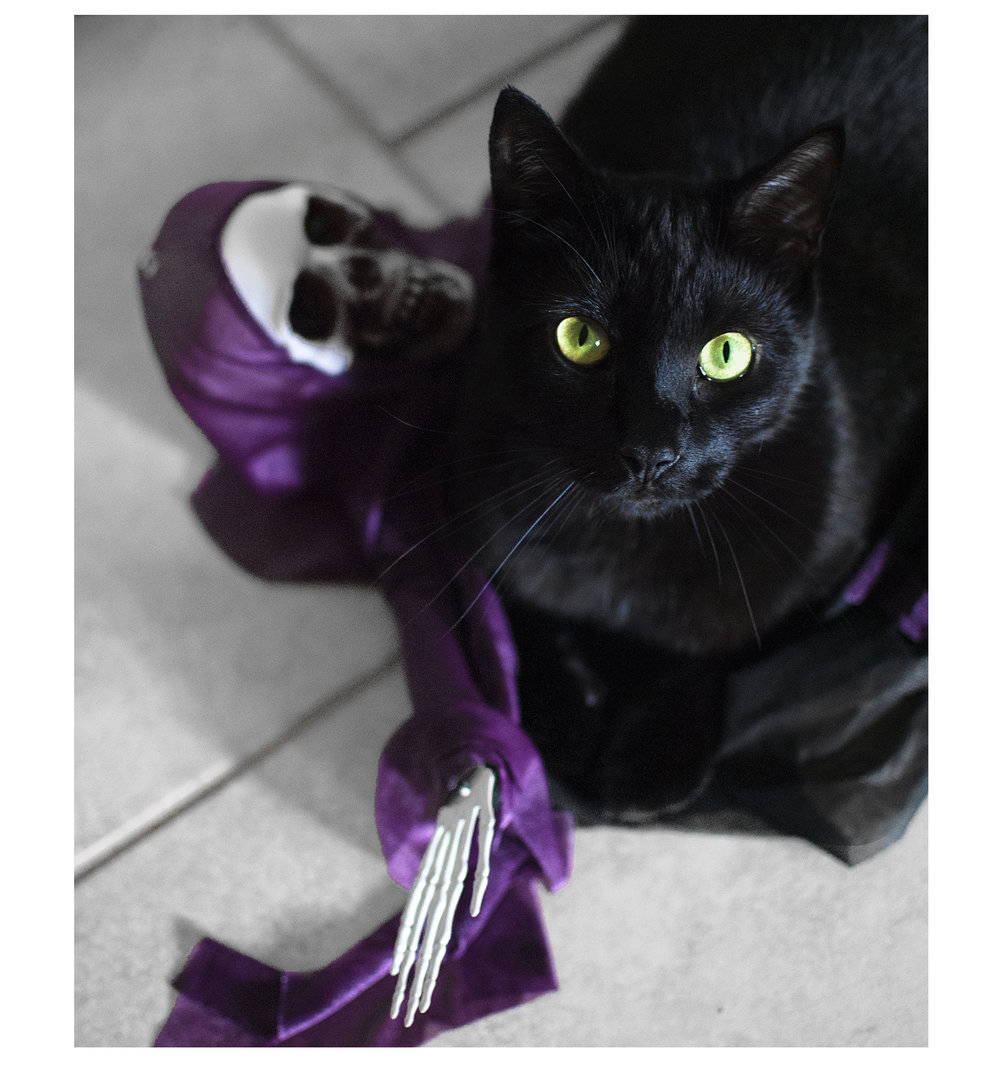 Pierre, our black cat is doing a mighty fine job at keeping the evil spirits away!