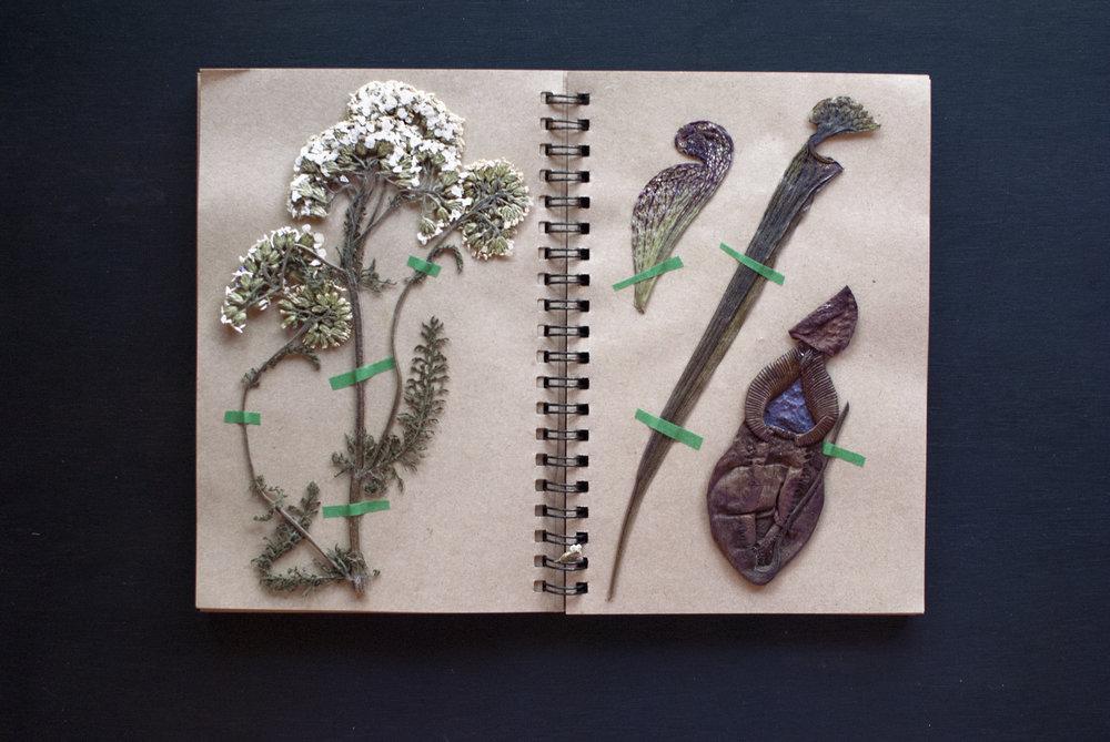 flowerbook4.jpg