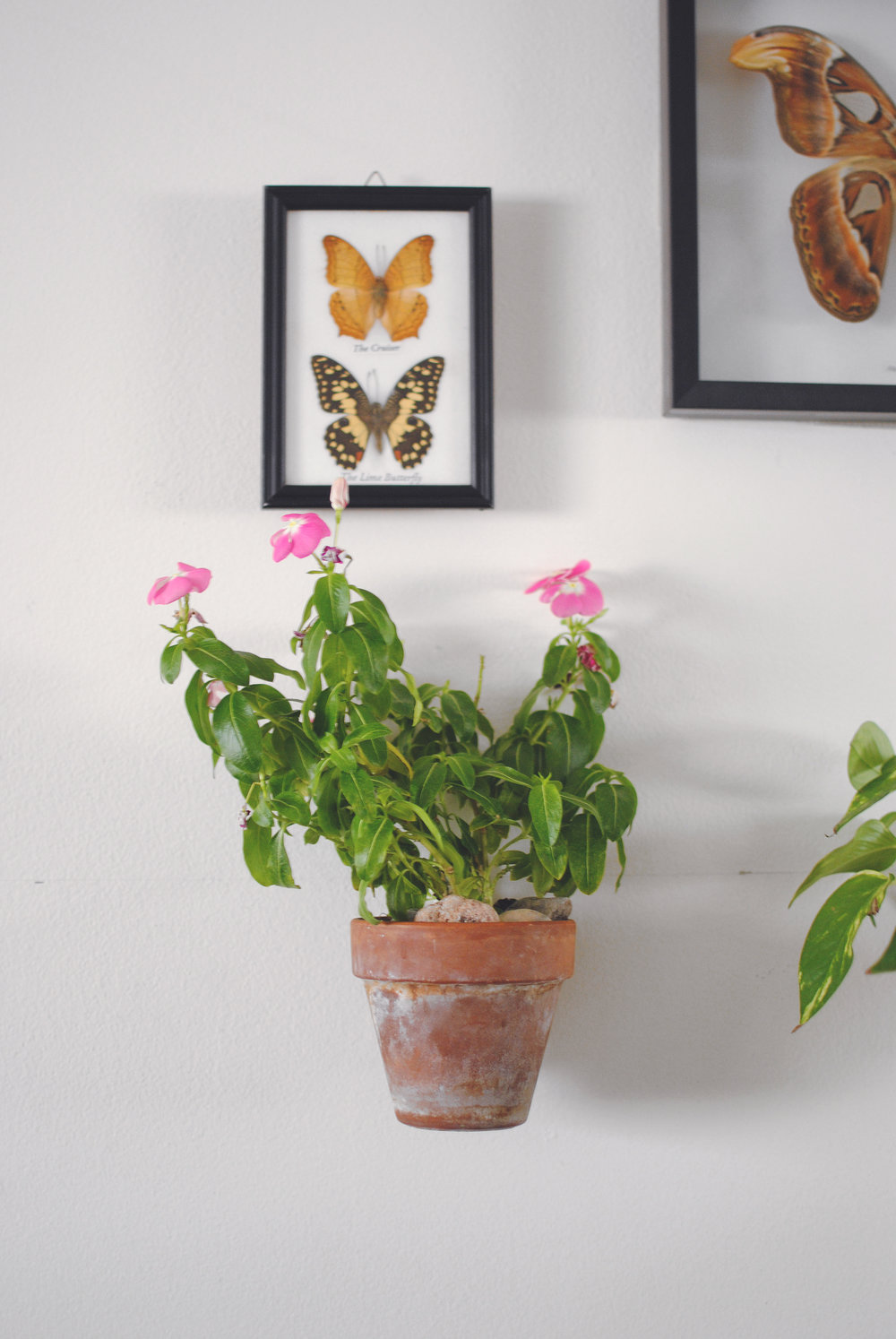 Pink flowers on my bedside.  The wall hangers for the potted plants were 3D printed by Chuck.