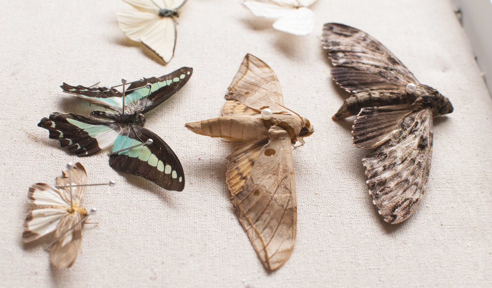 Wow, cool side view of the moths.
