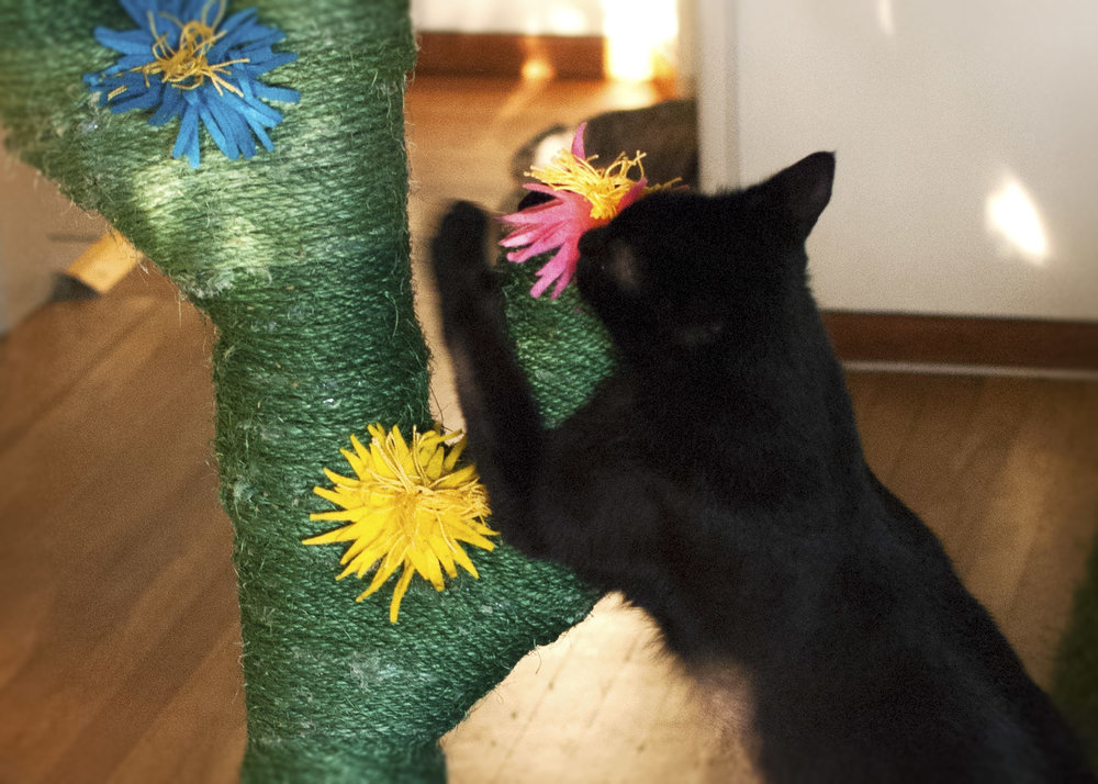 Is little Pierre pollinating this flower!?