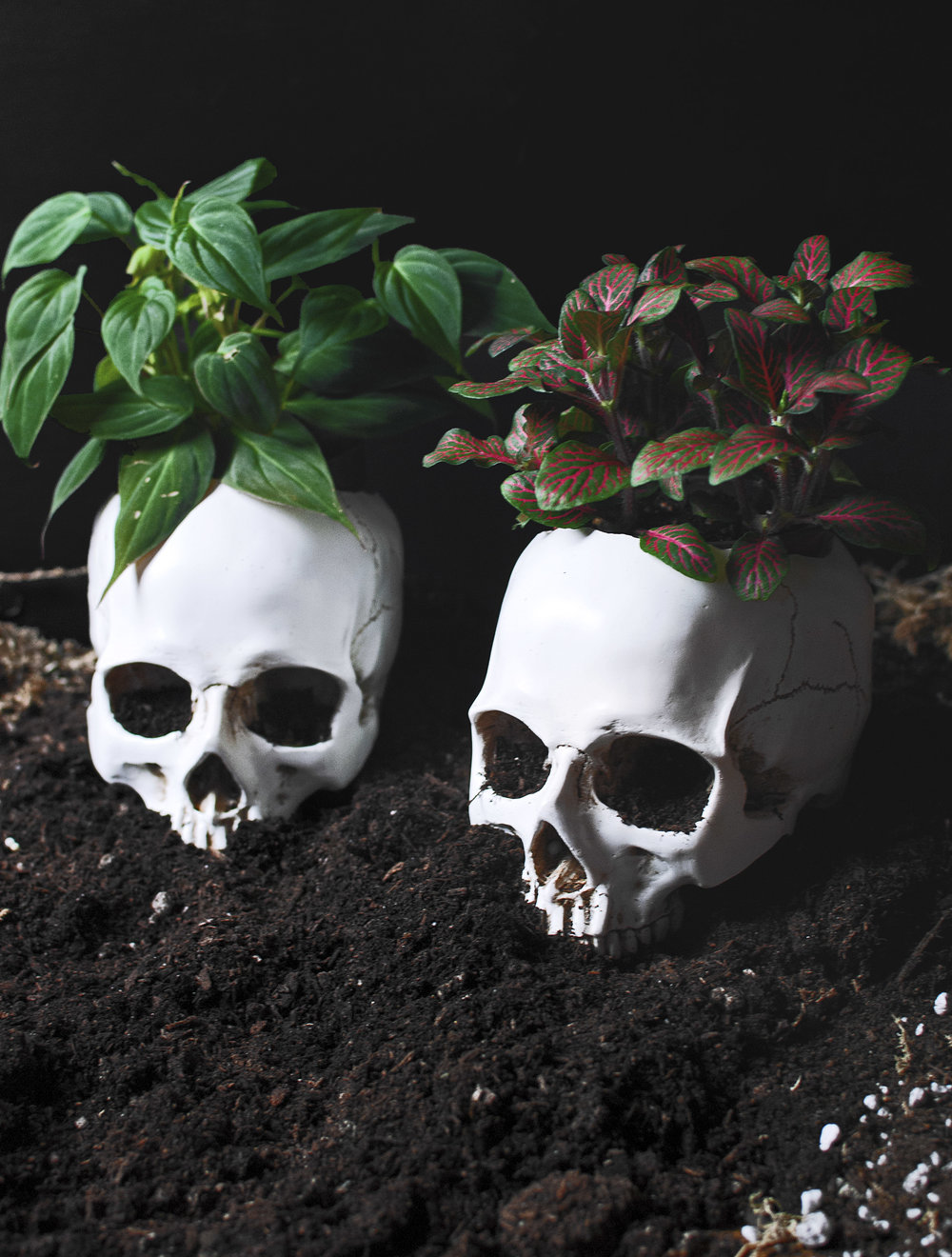 DIY Skull Planters feat. Velvet Philodendron + Fittonia