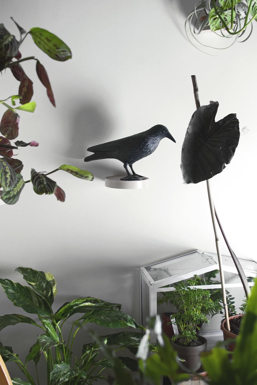 Halloween houseplant decor in an apartment jungle, including a  Colocasia esculenta.
