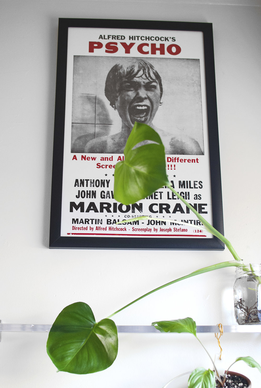 Two monsters: Alfred Hitchcock's  Psycho  poster with a  Monstera deliciosa .