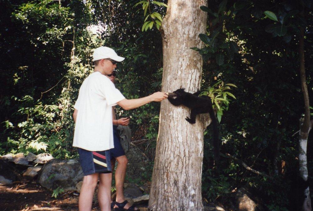 Cute lemur